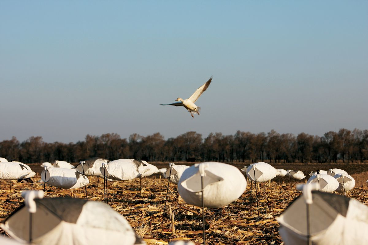 White Rock Decoys Light Goose Decoys