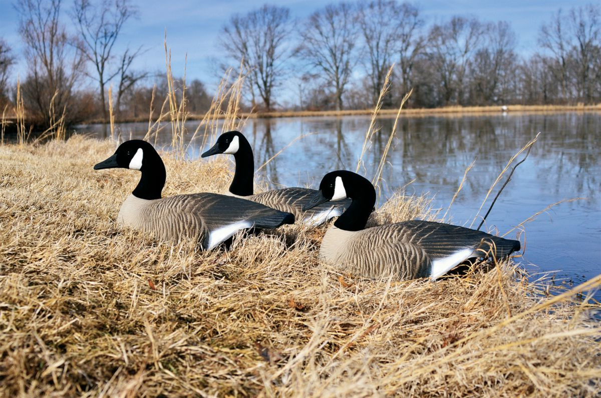 Higdon Outdoors Standard Half-Shell Canada Goose Decoys – Six-Pack