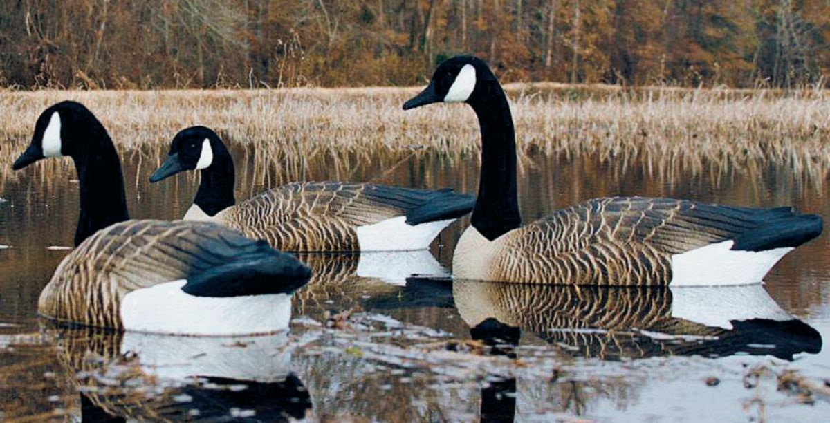 Higdon Outdoors Alpha Canada Goose Foam-Filled Floater Decoys – Four-Pack