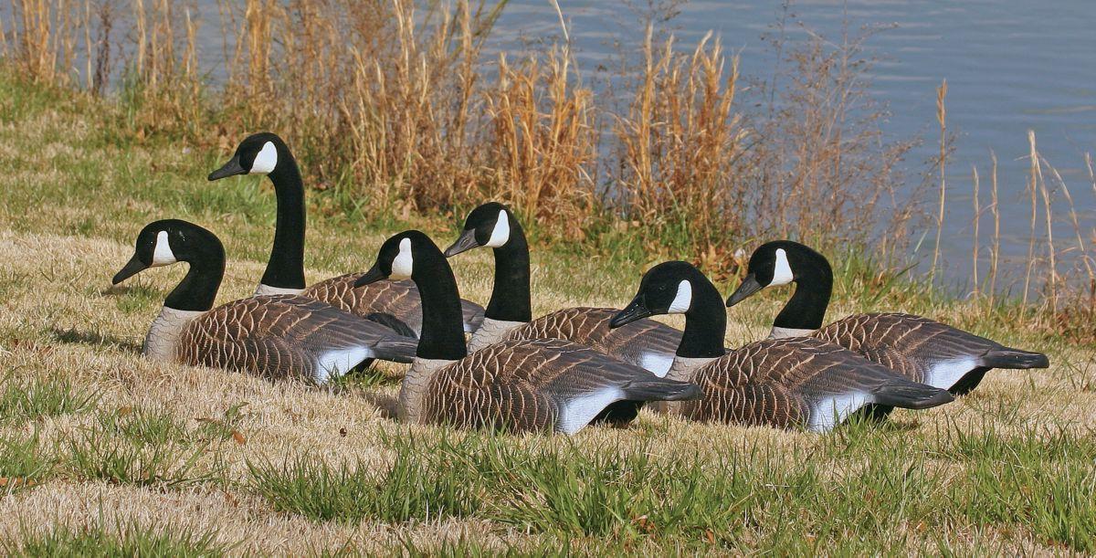 Higdon Standard Canada Goose Shells