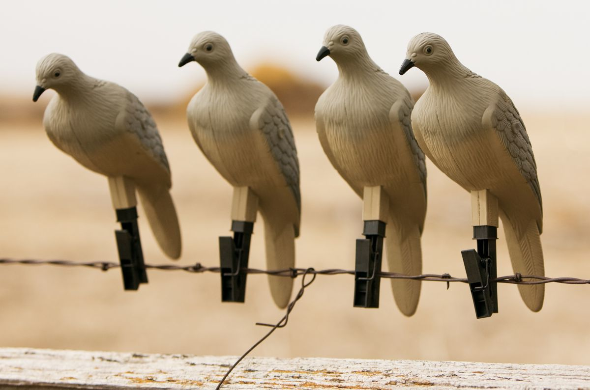 Mojo Outdoors® 4-Pack Dove