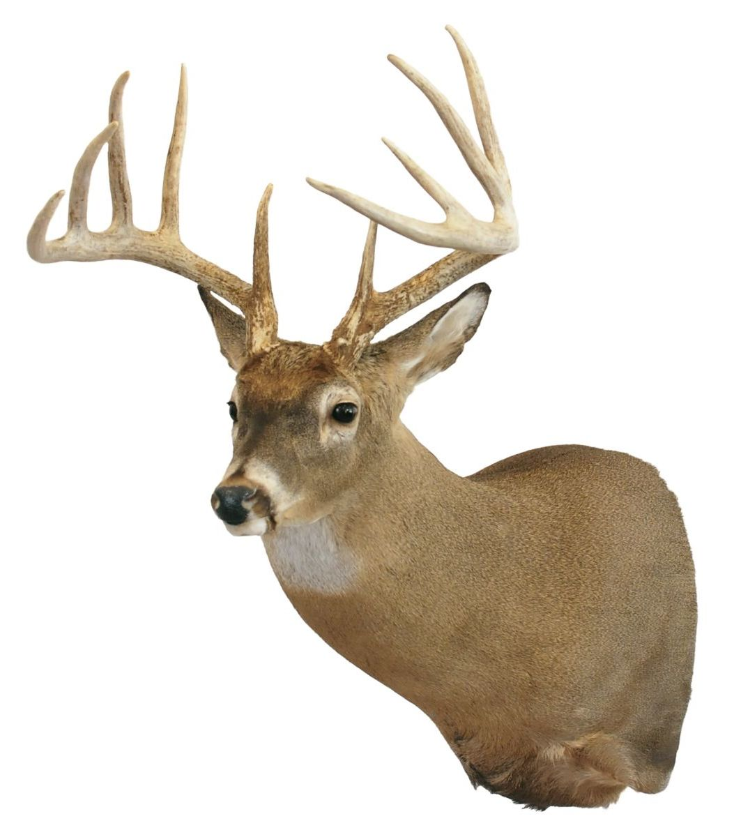 Boss Buck Full Range Hanging Systems