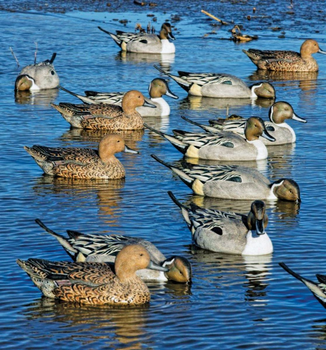 Avian-X Topflight Pintail Decoys – 6-Pack