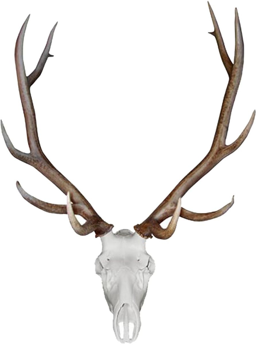 Mountain Mike's Skull Master Elk Antler Mounting Kit